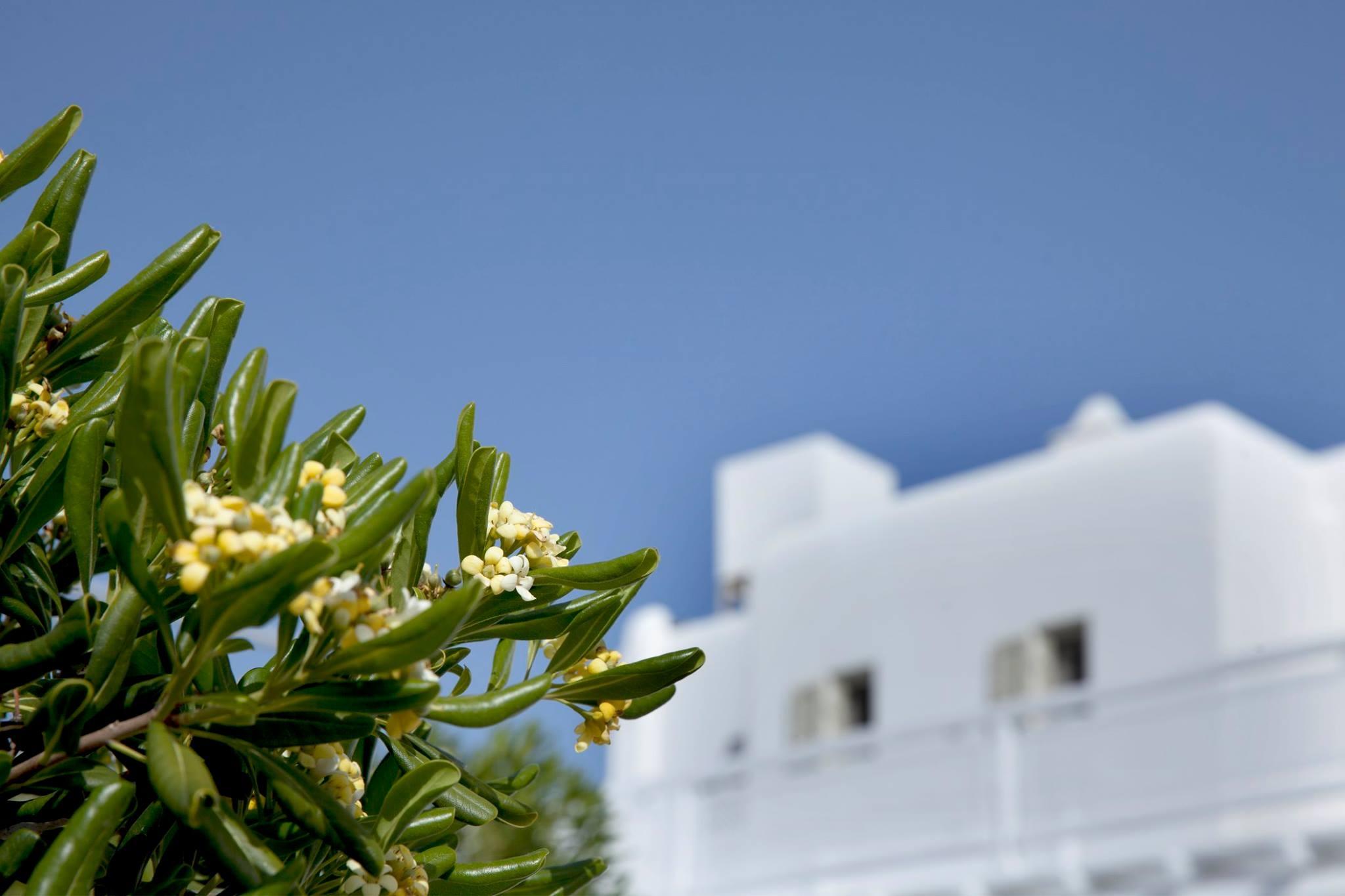 La Residence Mykonos Hotel Suites.